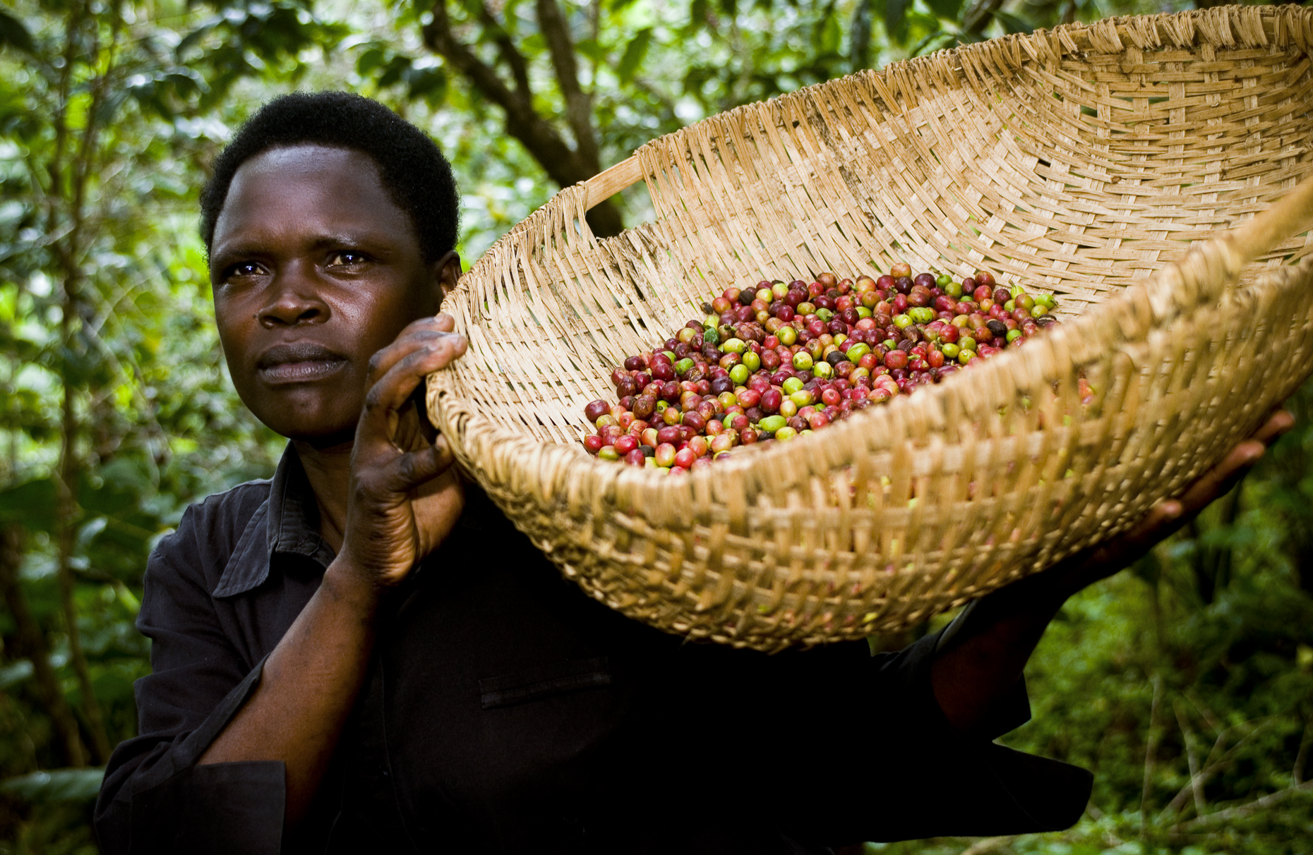 Fair trade coffee farmer, Uganda