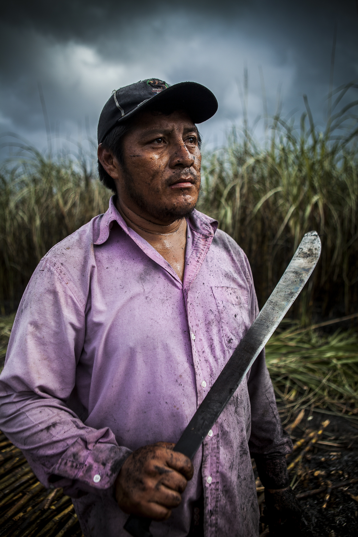 Fair trade sugar cane farmer, Belize