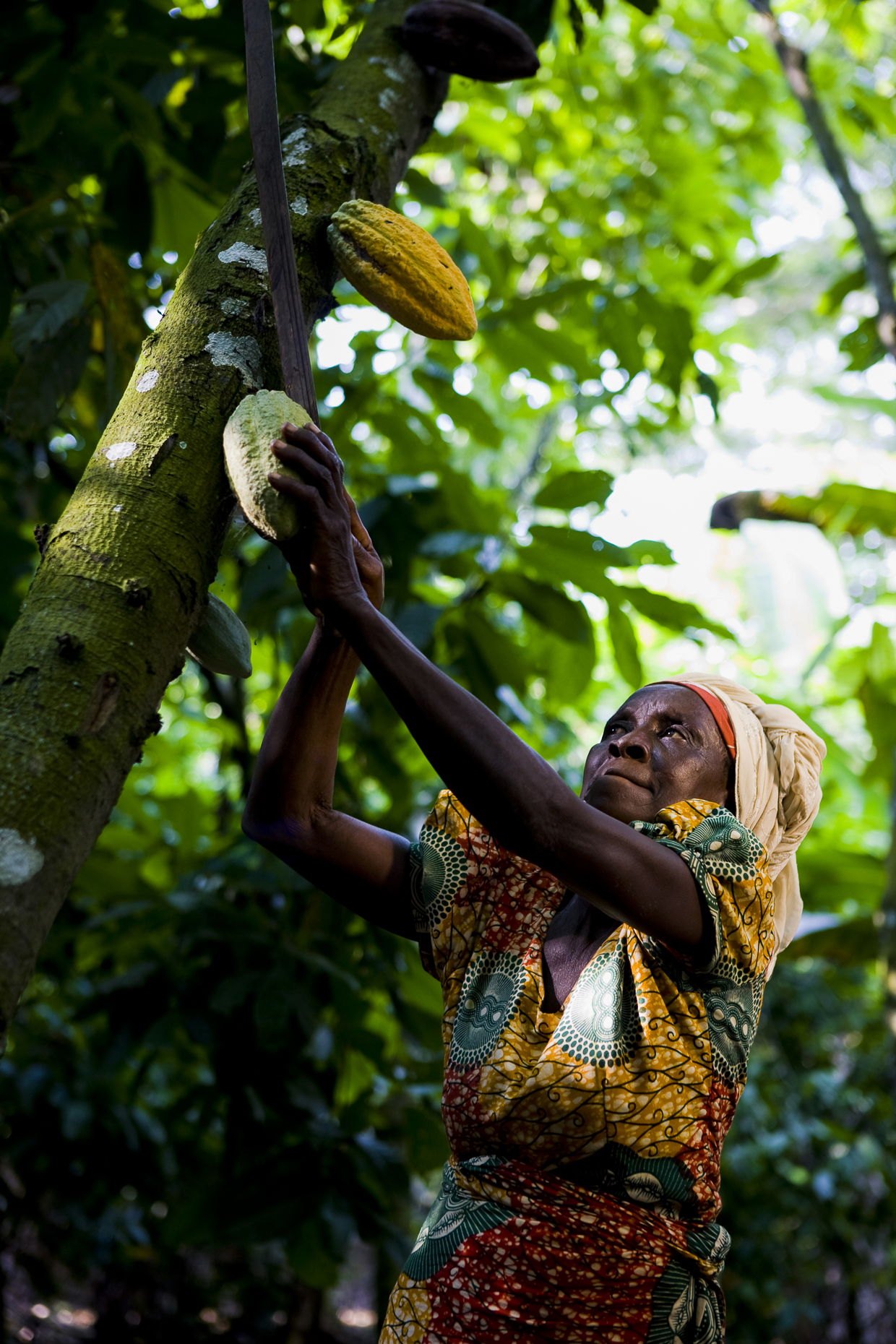Fair trade cocoa farmer