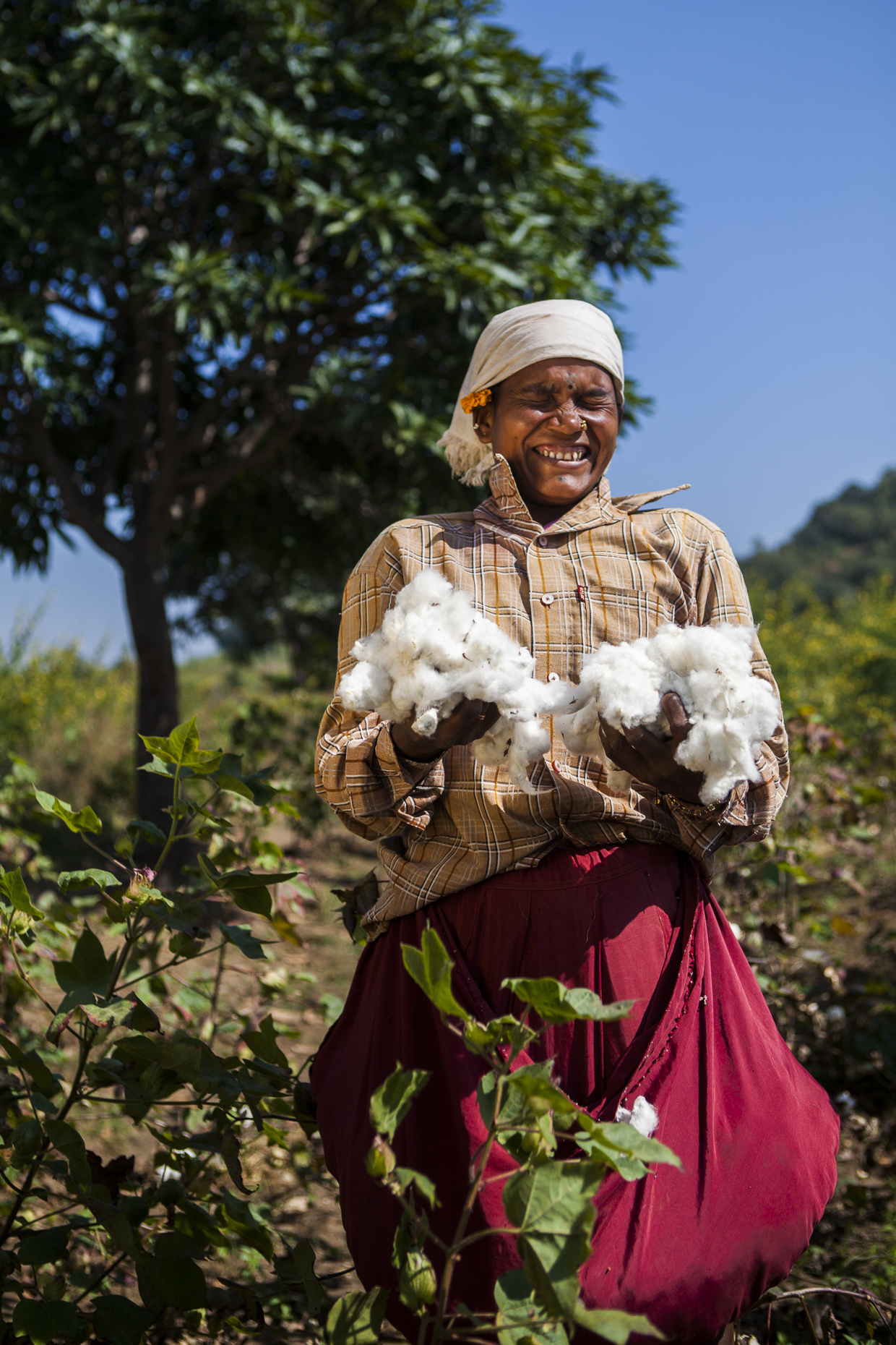 Fair trade cotton farmer, India