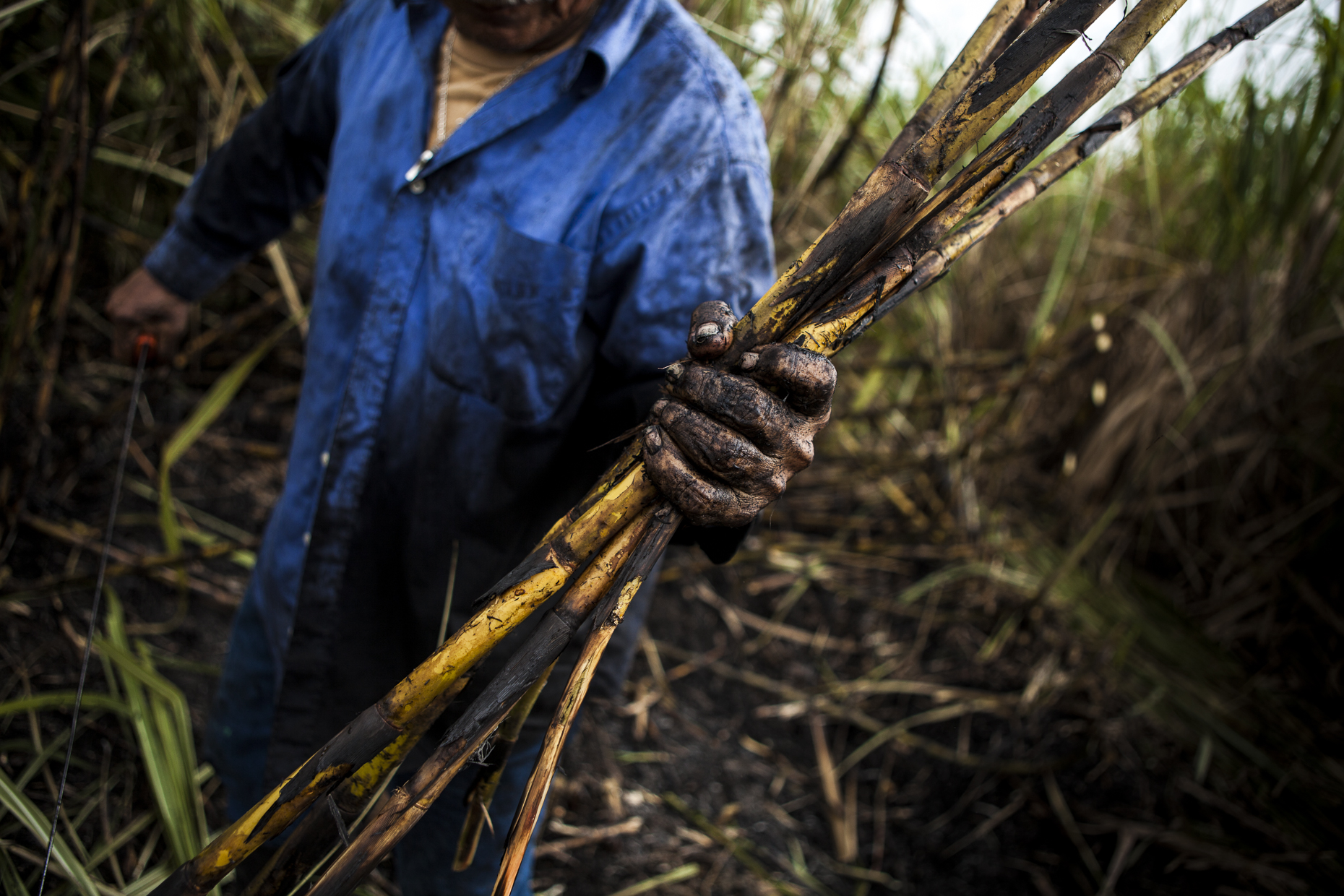 Sugarcane farmer, Belize