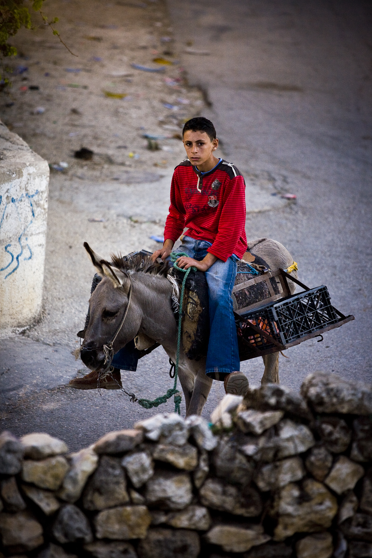 Boy on donkey, West Bank